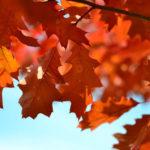 Herfst het seizoen van het element Metaal